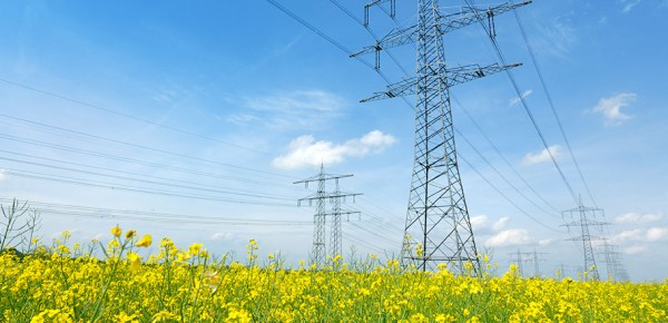 Overhead Conductors in Flower Field